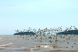 vögel fliegen meer phuket