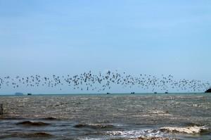 vögel über dem meer phuket thailand
