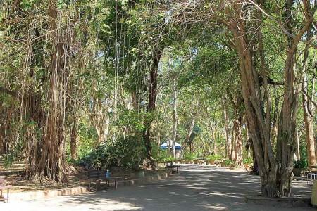 banyan tree khao rang phuket