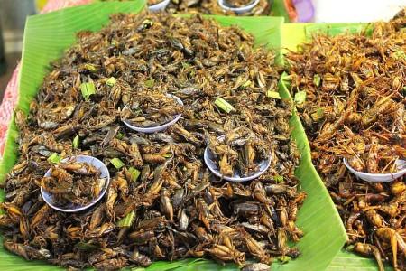 insekten essen thailand
