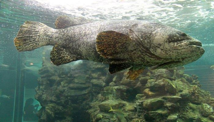 phuket aquarium3