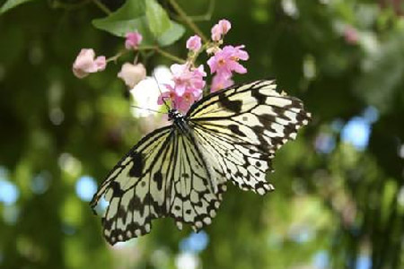 butterfly garden phuket ausflüge