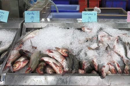 frische Fische Markt Phuket