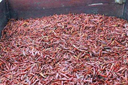 frische Chilies getrocknet Thailand
