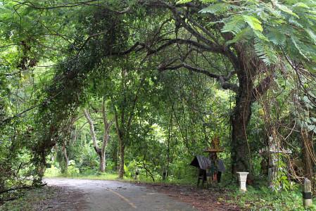 joggen unter bäumen phuket