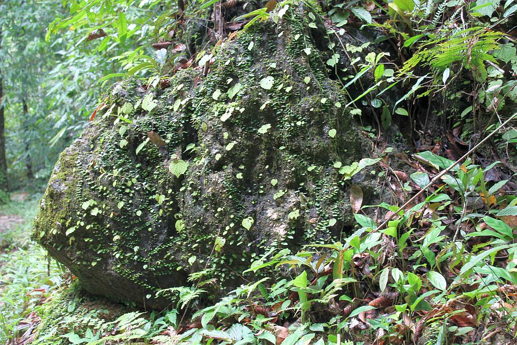 grün bewachsener moos stein im urwald