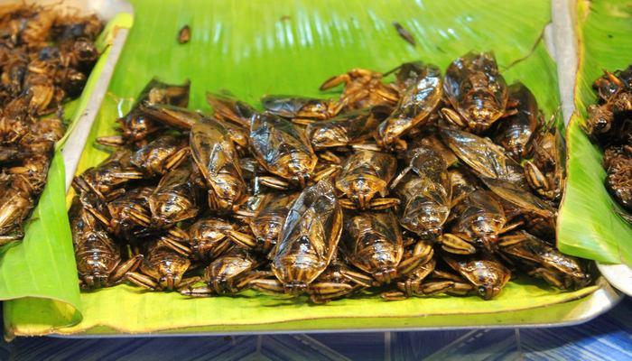 insekten essen gehen phuket