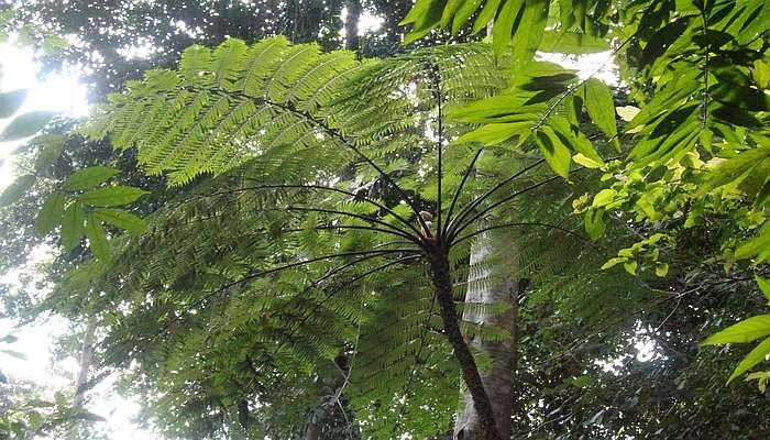 regenwald khao sok nationalparl