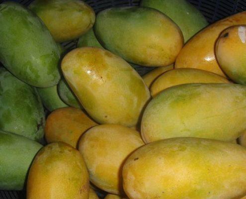 Mango gruen gelb
